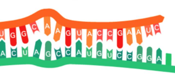 RNA-RNA interaction